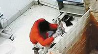饲养员被曝虐待1个月大华南虎